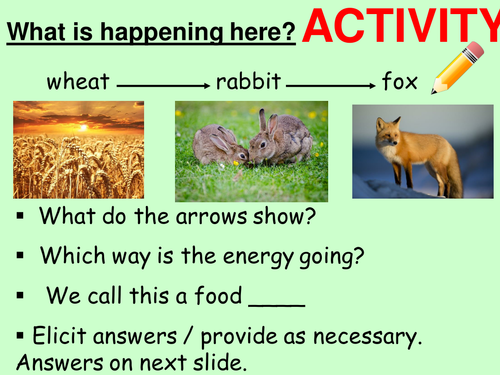 Food chains and food webs. Complete lesson. KS3 Biology.