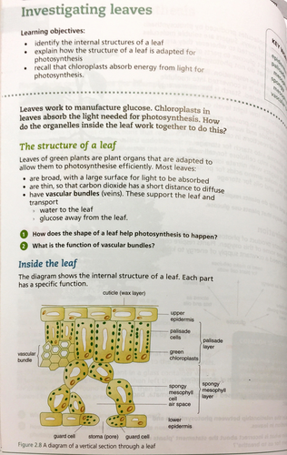 Leaf structure, adaptations & function - NEW AQA GCSE