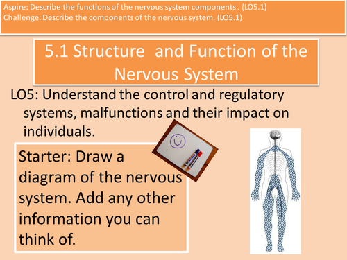 5.1 Components of the Nervous System Unit 4 Health and Social Care L3 Cambridge Technical