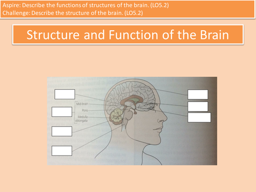 LO5.2 Structure and Function of the Brain L3 Cambridge Technicals Health Unit 4