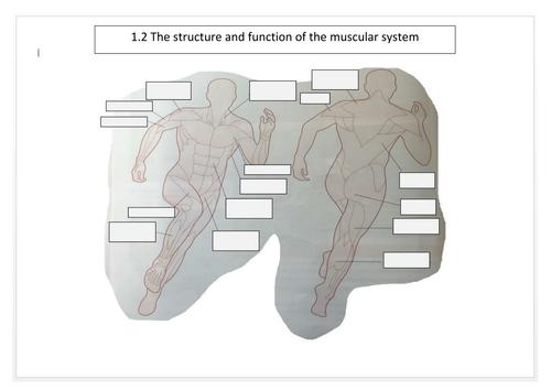 WJEC EDUQAS Muscular Skeletal System Unit of Work