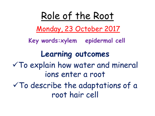 IGCSE 9-1 Role of the root in transpiration