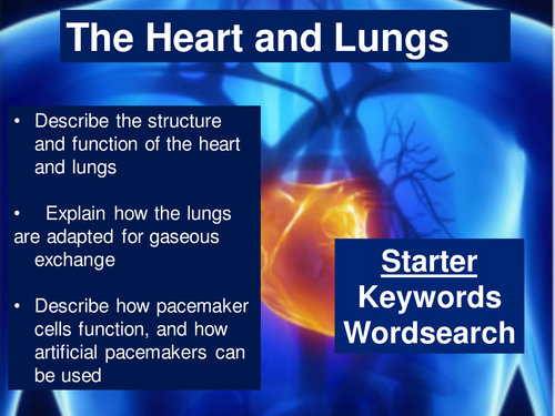 AQA GCSE Biology B2 The Heart and Lungs
