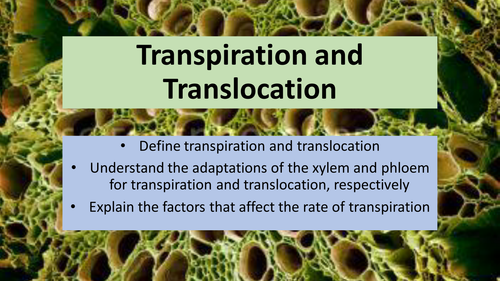 AQA GCSE Biology B2 - Transpiration and Translocation