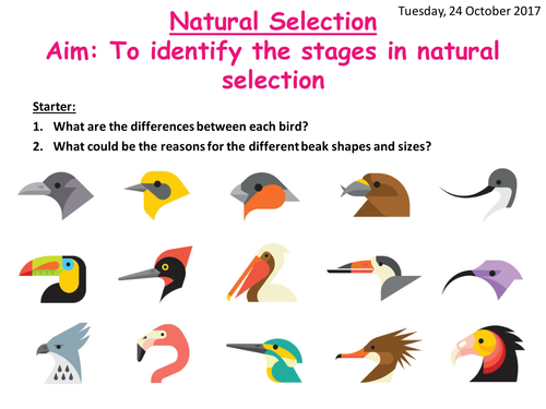 practical 8 natural selection On this page you can read or download natural selection practical task for grade 12 in pdf format.