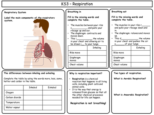 ks3 biology revision sheets by cherylannenicol teaching resources. Black Bedroom Furniture Sets. Home Design Ideas
