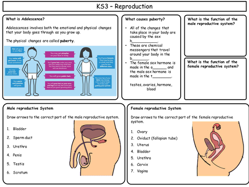 KS3 Revision sheets for Reproduction