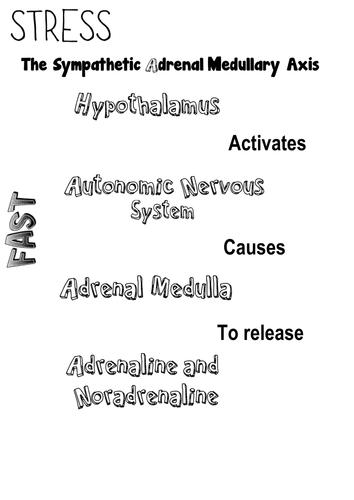 Psychology Defense Mechanisms Avoiding Stress Teaching Resources