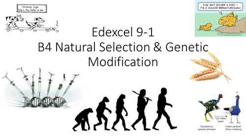 B4 Edexcel 9-1 Natural selection and Genetic modification