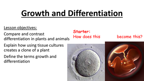 Growth and differentiation