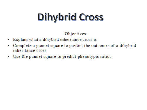 DIHYBRID CROSS AND AUTOSOMAL LINKAGE by kirstylheath Teaching – Dihybrid Cross Worksheet Answers