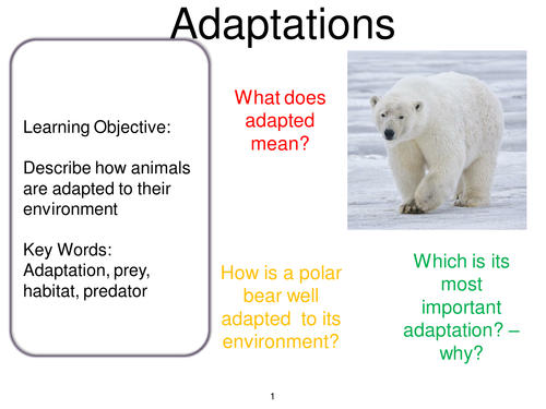 Creating A World Adaptations Teaching Resources