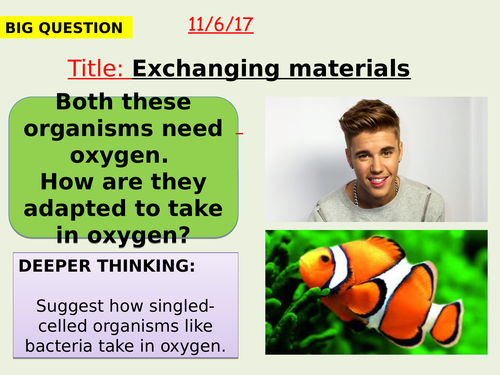 AQA new specification-Exchanging materials-B1.10