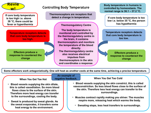 Controlling Body Temperature GCSE Active Revision Card Activity Versatile and Effective