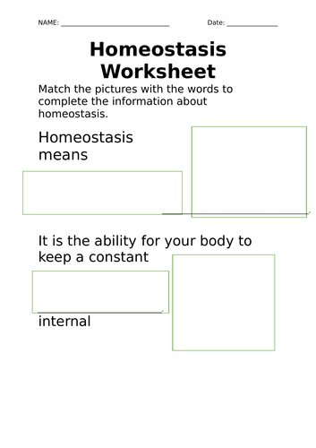 Homeostasis Video And Worksheet For Life Skills By