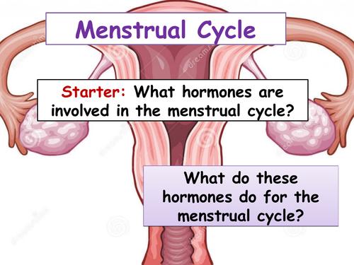 cB6c Menstrual Cycle