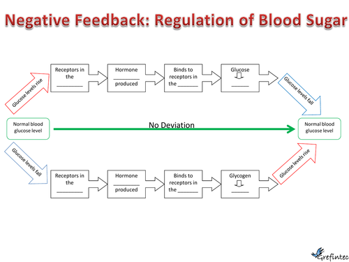Negative Feedback: Control of blood sugar