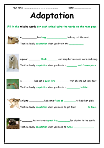 Adaptation Activity (2-page booklet)