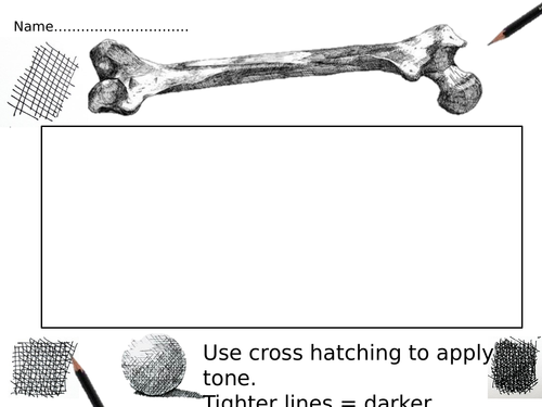 Drawing bones worksheets