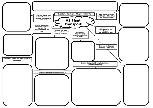 AS Biology Plant Transport Mind Map/Revision Mat by