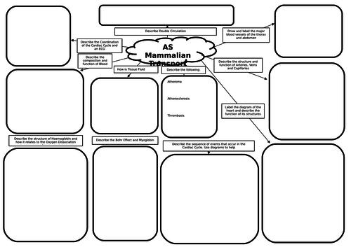 AS Biology Mammalian Transport Mind Map/Revision Mat