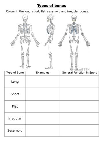 types of bones worksheet by burnsinwigan teaching resources tes. Black Bedroom Furniture Sets. Home Design Ideas
