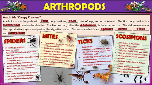 Arthropods Engaging 3D Animated PowerPoint