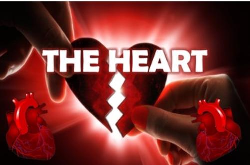 Heart, Cardiovascular System 3D Animated PowerPoint