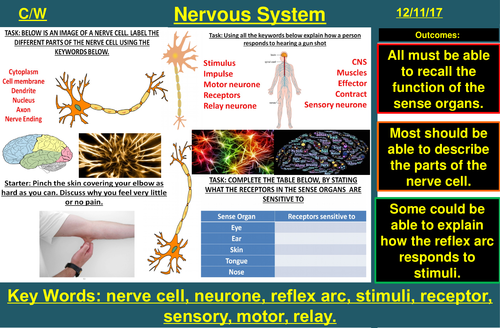Nervous System & Reflex Arc | AQA B2 4.5 | New Spec 9-1 (2018)