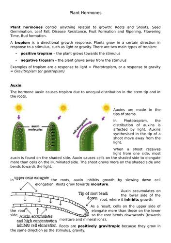 New GCSE Plant Hormone Comprehension