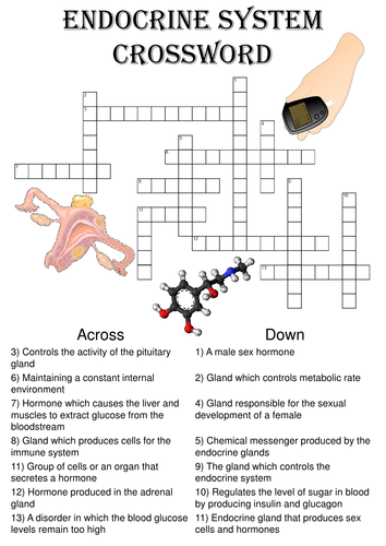Biology Crossword Puzzle: The endocrine system (Includes answer key ...