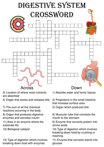 Biology crossword puzzle the digestive system includes answer key biology crossword puzzle the digestive system includes answer key by ansellwill teaching resources tes ccuart Images
