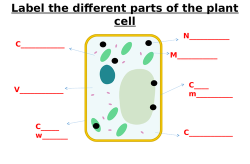 Animal Cell, Plant Cell, Bacterial Cell Label Worksheets (Differentiated)