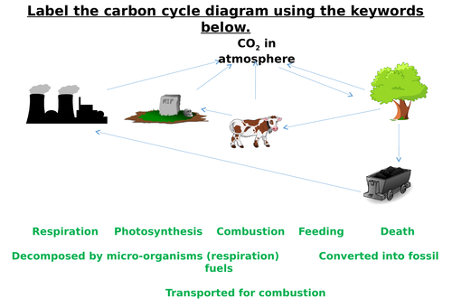 The Carbon Cycle Label Worksheets Differentiated By Zmzb