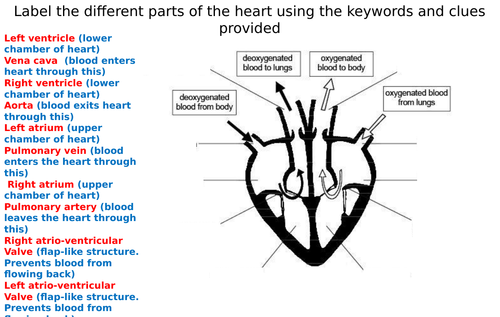 the heart diagram label worksheets differentiated by. Black Bedroom Furniture Sets. Home Design Ideas