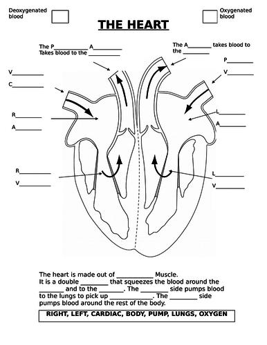 The Heart - AQA (9-1)
