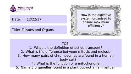 Tissues and Organs - AQA (9-1)