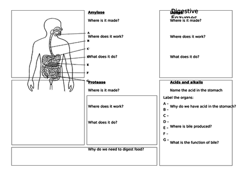 How the Digestive System Works (with Required Practical) - AQA (9-1)