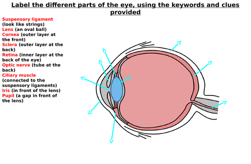 The eye diagram label worksheets differentiated by zmzb teaching the eye diagram label worksheets differentiated by zmzb teaching resources tes ccuart