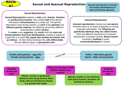 Inheritance Topic 6 Part 1 Revision Card Activities for New AQA Biology GCSE