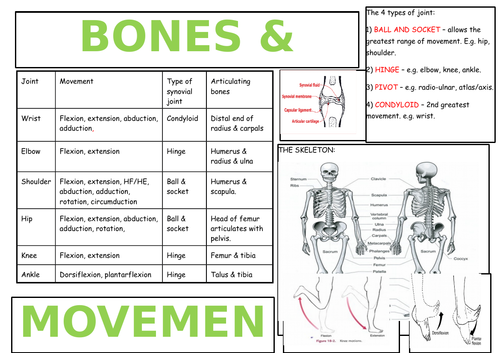 OCR AS PE ANATOMY & PHYSIOLOGY REVISION BROADSHEETS (NEW SPEC 2016+)