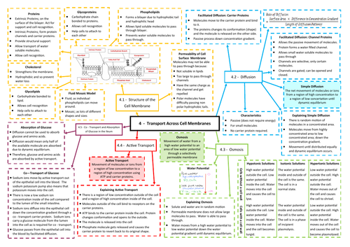 Transport Across Cell Membranes Revision Mind Map - AQA AS/A Level Biology (7401/7402)