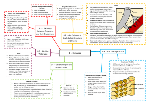 Exchange Revision Mind Map - AQA AS/A Level Biology (7401/7402)