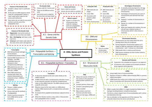 DNA, Genes and Protein Synthesis Revision Mind Map - AQA AS/A Level Biology (7401/7402)