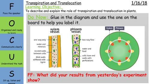 Transpiration And Translocation By Elizabethangharad Teaching