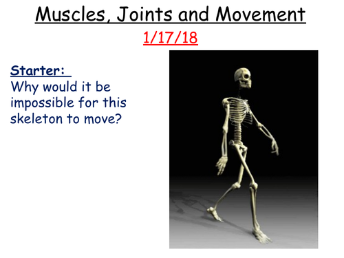 Muscles, joints and movement + effect of too much exercise/too little exercise.