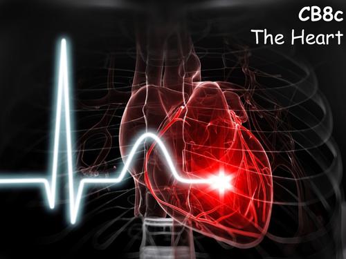 Edexcel CB8c The Heart