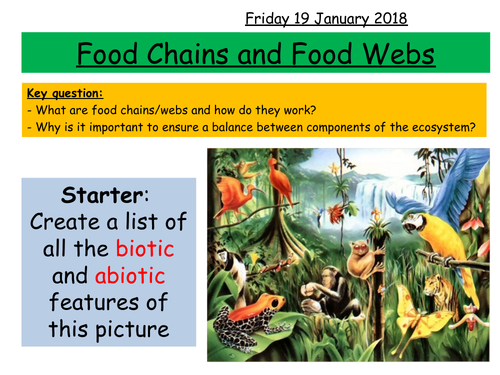 Food chains and webs KS3