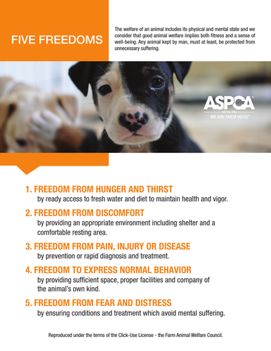 Animal Care - Five Freedom Poster