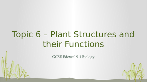 Edexcel GCSE 9-1 Biology Topic 6 – Plant Structures and their Functions